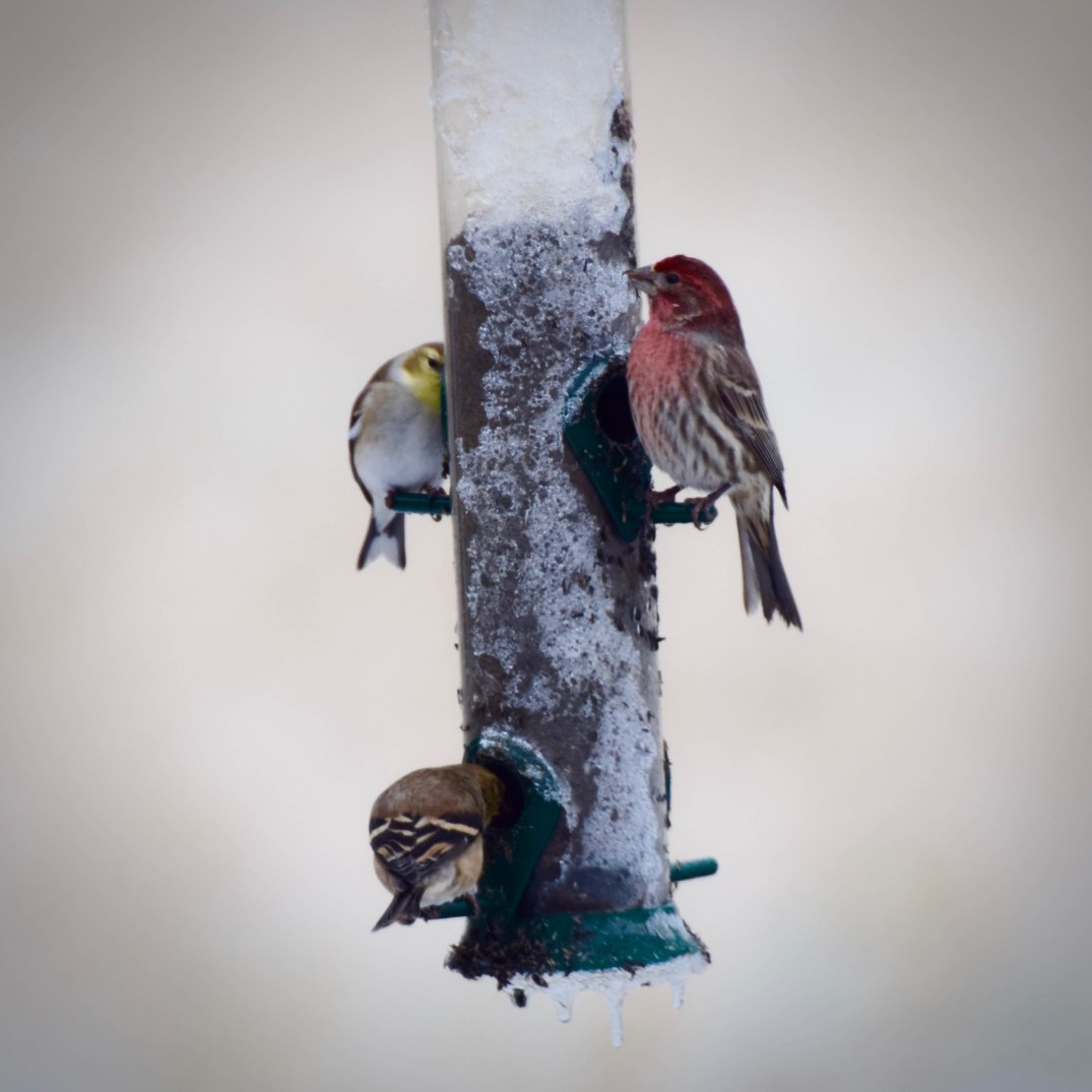 winter-birds-2