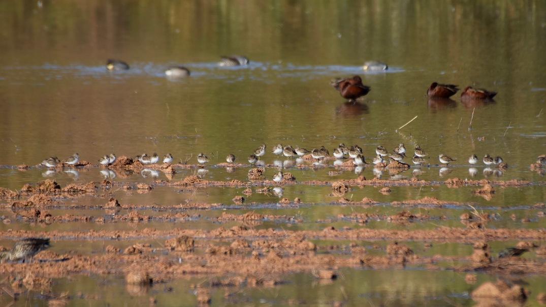 Riparian Preserve 2018